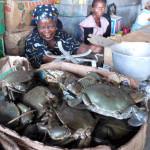 24_Mercado central Maputo, vendedoras de cangrejos