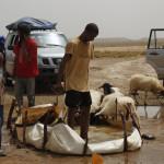 Nomadas en el Sahara dando de beber al ganado