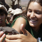 Un camaleon se suma a la expedicion, Alucemas