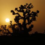 Expedicion Madrid Rumbo al Sur 2011 Baobabs en el camino de Fatik a Sant Louis