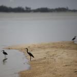 Expedicion Madrid Rumbo al Sur 2011 Aves acuaticas en el rio Senegal
